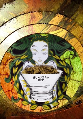 Sumatra red
