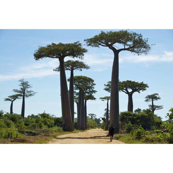 Biologische Baobab Olie