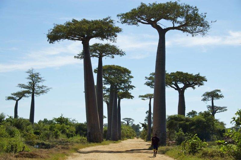 Arc en Sels Biologische Baobab Olie