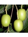 Biologisch serum Clairessence rosacea en couperose