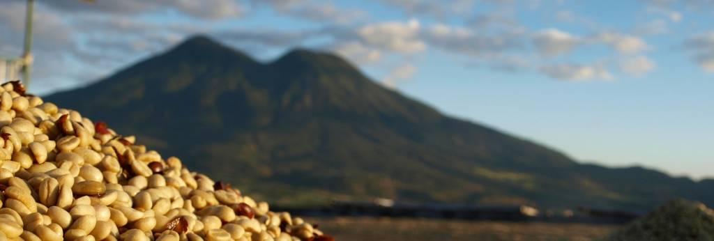 Premium Kaffeebohnen aus Südamerika