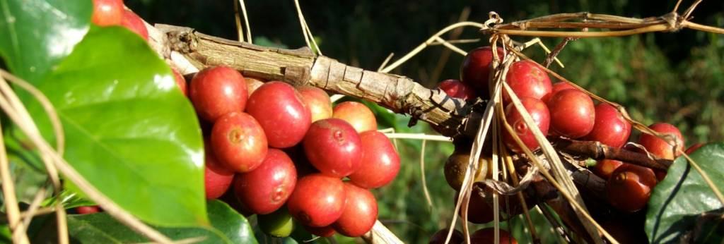 Das Kaffeebündel als Geschenk für Liebhaber der braunen Bohne