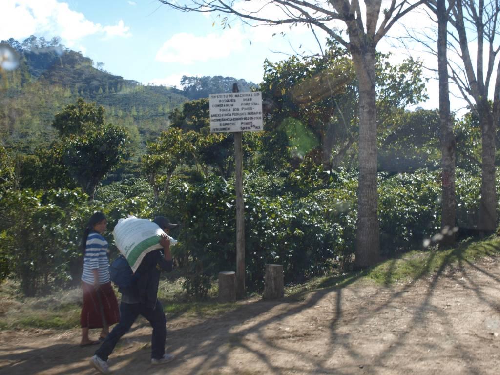 Guatemala La Cascada Estate