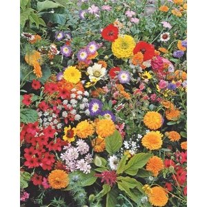 Japans Bloemengazon - 250 gram