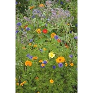 Eetbare Bloemen Mix - 250 gram