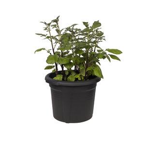 Elho Green Basics Aardappelpot - 33 cm