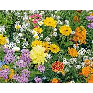 Ten Have Bijenmengsel & Hommels 1-jarig 250gram bloemzadenmix