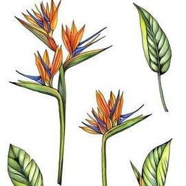 Crealies und CraftEmotions Timbro a motivi, trasparente, A6, fiore del paradiso