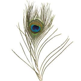 BASTELZUBEHÖR, WERKZEUG UND AUFBEWAHRUNG 1 peacock feather, 30 cm long and 6 cm wide