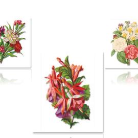 Bilder, 3D Bilder und ausgestanzte Teile usw... Feuille A4 prédécoupée 3D: roses, oeillets, fuchsias