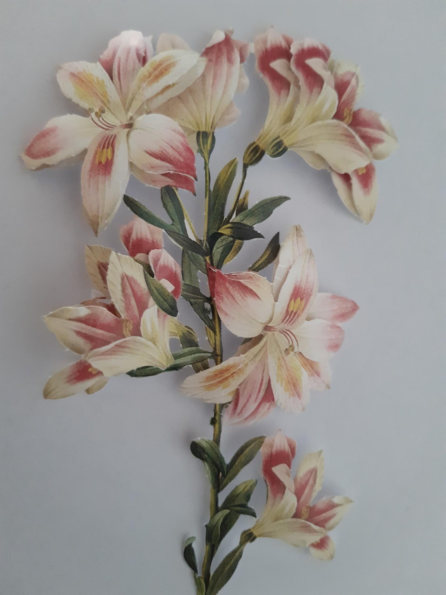 Hübsche Blume, mit 3D relief