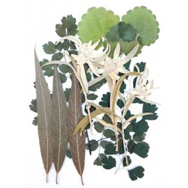 Pressed dried flowers and leaves, packed airtight, for decoration