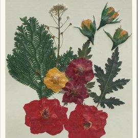 Embellishments / Verzierungen Et sæt af tørrede og pressede blomster