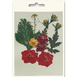 Un ensemble de fleurs séchées et pressées