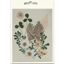 Embellishments / Verzierungen Un conjunto de flores secado y prensado