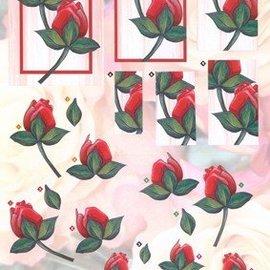 BILDER / PICTURES: Studio Light, Staf Wesenbeek, Willem Haenraets A4 cut sheets: red roses