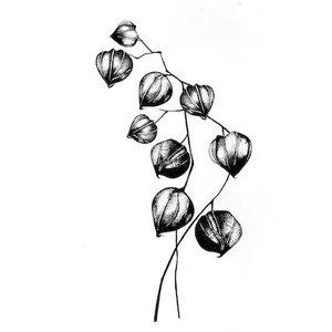 Stempel / Stamp: Transparent Transparante stempels: bloemen, planten