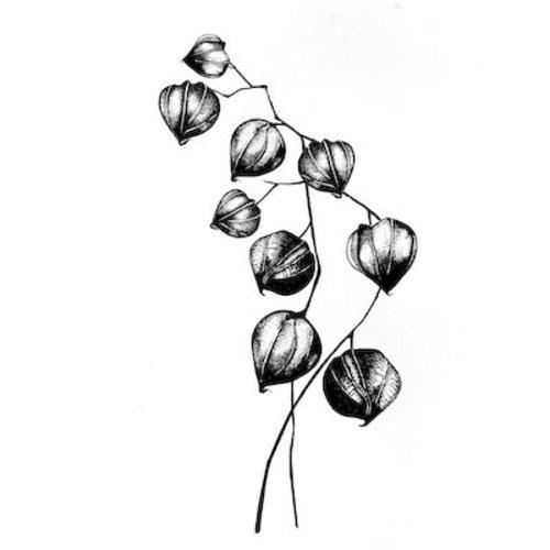 Stempel / Stamp: Transparent tampons transparents: fleur, plante