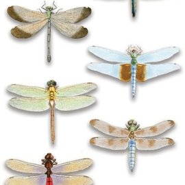 Embellishments / Verzierungen Luxury 3D sticker dragonfly, dimensional
