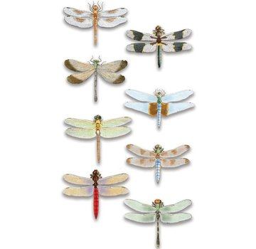 Embellishments / Verzierungen Luxury 3D sticker dragonfly, dimensional