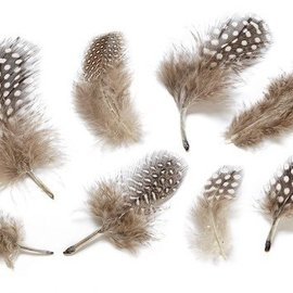 Embellishments / Verzierungen Decorative feathers, nature