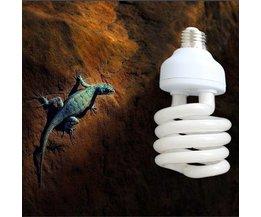 UVB Lamp Voor Een Terrarium