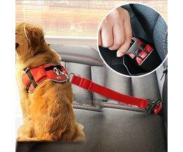 Autogordel voor Hond