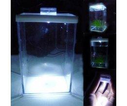 Kleine Aquarium