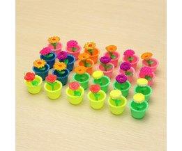 Toy Flower Grows Avec De L'Eau