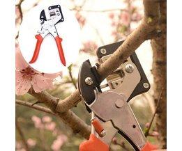 Entschaar For Trees Intensification Et Arbustes