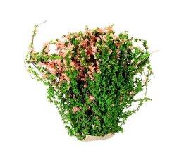Petit Plant Art En Deux Couleurs