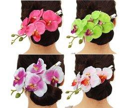 Orchid Pour Haar