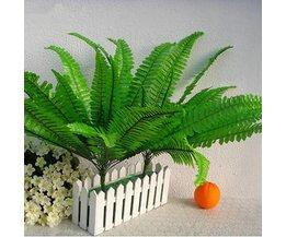Plantes En Soie Ferns