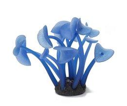 Coral Aquarium Usine