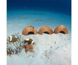 Coconut Aquarium