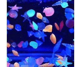 10 Pierres Fluorescent Aquarium