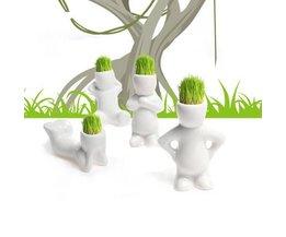 Plante Pot Mignon Petit Homme