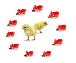 Réservoir D'Eau Avec Connexion Pour Chicks 10 Pieces