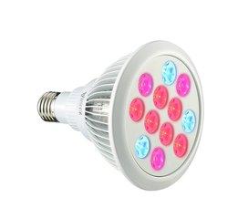 Arilux E27 Pflanzen Wachsen Licht Für 12W / 24W