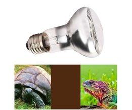 Tiere Lampe UVA