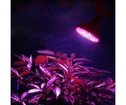 Wachsen Licht Für Pflanzen
