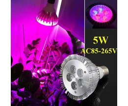 LED Wachsen Lichter (5W, E27)