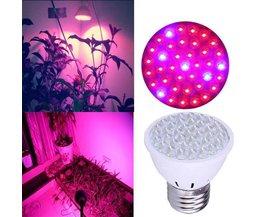 LED-Lampe 2 Watt