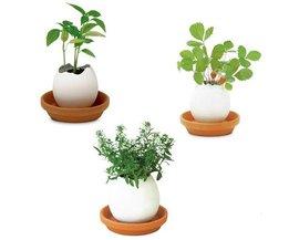 Büropflanze DIY