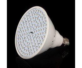 LED-Lampe Für Gewächshaus-Beleuchtung Mit Rotem Und Blauem Licht
