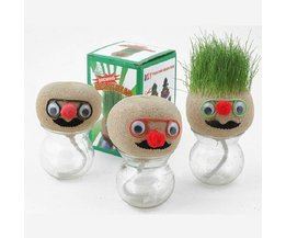 Grass Head In Jar