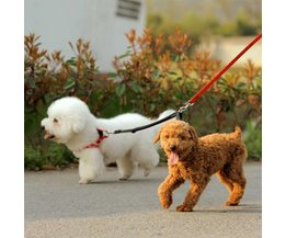 Duo Dog Belt Nylon