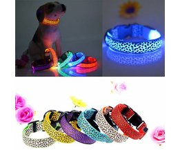 Luminous Collars S