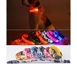 Luminous Dog Collar (Size L)