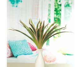 Art Room Plant